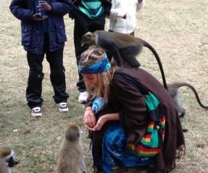Africa Adventure Monkeys